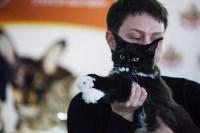 В Туле прошла выставка «Пряничные кошки» , Фото: 56