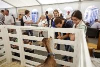 Выставка коз в Туле, Фото: 14