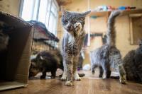 Волонтеры спасли кошек из адской квартиры, Фото: 64