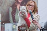 Выставка кошек в Туле, Фото: 57