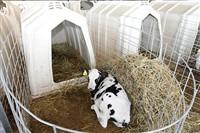 Счастливые коровы, Фото: 8