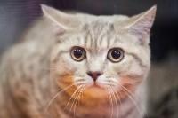 В Туле прошла выставка «Пряничные кошки» , Фото: 39