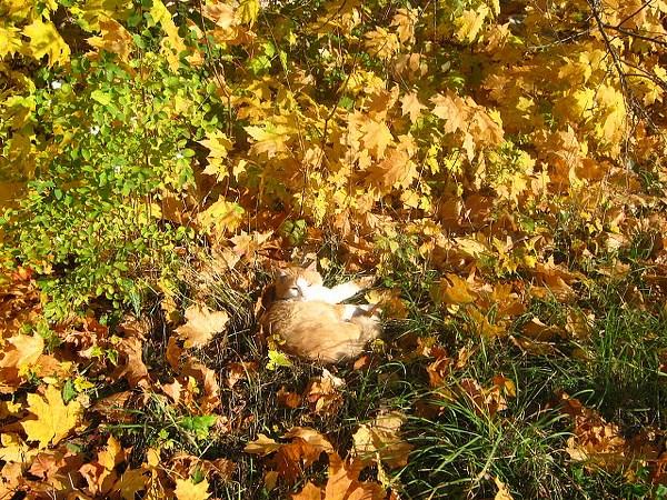 Найди кота))