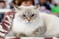 Выставка кошек. 4 и 5 апреля 2015 года в ГКЗ., Фото: 77