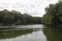 Туляки сообщают о массовой гибели уток в Платоновском парке, Фото: 11