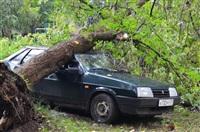 На автомобиль упало дерево, Фото: 5