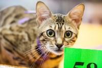 В Туле прошла выставка «Пряничные кошки» , Фото: 43