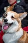 Выставка собак в Туле 26.01, Фото: 1