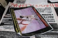 Более 8000 туляков требуют запретить убийство бездомных животных, Фото: 18