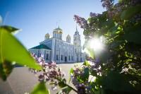 Яблони у кремля, Фото: 11