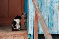 Тульские котики, Фото: 25
