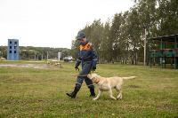 Испытания кинологов в Тульском спасательном центре, Фото: 52