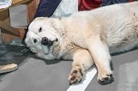Выставка собак в Туле 26.01, Фото: 30