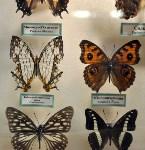 Экспозиция тропических насекомых в Тульском экзотариуме, Фото: 6