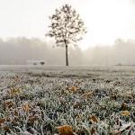 Ледяное утро в Центральном парке, Фото: 31