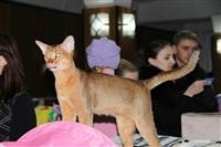 В Туле прошла международная выставка кошек, Фото: 18