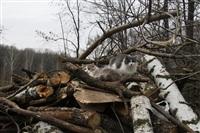 Ремонтные работы в ЦПКиО им. Белоусова, Фото: 39