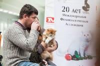 Выставка кошек в МАКСИ, Фото: 37