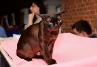 Выставка кошек в Искре, Фото: 35