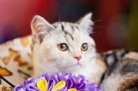 """Выставка """"Пряничные кошки"""". 15-16 августа 2015 года., Фото: 74"""