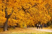 Золотая осень в Туле-2019, Фото: 91