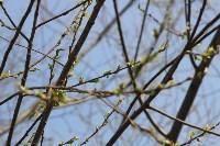 Краски весны в Туле, Фото: 38