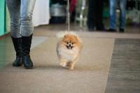 Выставка собак в Туле, 29.11.2015, Фото: 89