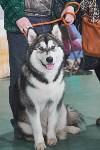 Выставка собак в Туле 26.01, Фото: 62