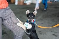 Благотворительный фестиваль помощи животным, Фото: 33