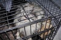 Похищенные собаки, Фото: 32