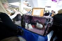 Выставка кошек. 4 и 5 апреля 2015 года в ГКЗ., Фото: 91