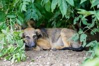 Собаки на тульской метеостанции, Фото: 5