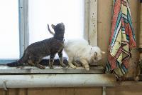 Волонтеры спасли кошек из адской квартиры, Фото: 13