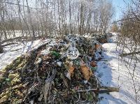 Под Тулой неизвестные сбросили в лесополосе несколько тонн гнилых овощей, Фото: 7