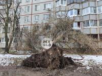 В Туле упавшее на девятиэтажку дерево повредило несколько балконов, Фото: 7
