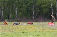 В Туле состоялись собачьи бега, Фото: 38