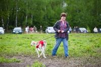 В Туле состоялись собачьи бега, Фото: 56