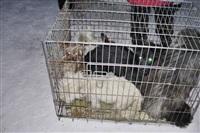 Похищенные собаки, Фото: 29