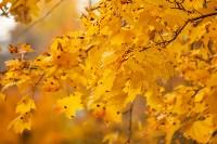 Золотая осень в Туле-2019, Фото: 89