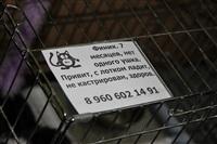 В Туле прошла международная выставка кошек, Фото: 74