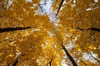 Золотая осень в Туле-2019, Фото: 70