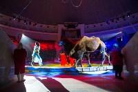 Тульский цирк, Фото: 69