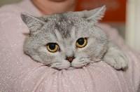 Выставка кошек в Туле, Фото: 20