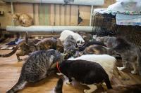 Волонтеры спасли кошек из адской квартиры, Фото: 39