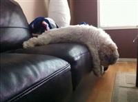 Кошки и собаки, проигравшие битву с мебелью, Фото: 2