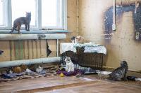 Волонтеры спасли кошек из адской квартиры, Фото: 12