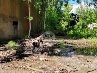 В Пролетарском районе Тулы ликвидируют разлив мазута, Фото: 3
