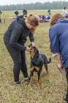 Международная выставка собак, Барсучок. 5.09.2015, Фото: 70