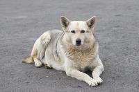 Дворняги, дворяне, двор-терьеры: 50 фото самых потрясающих уличных собак, Фото: 13
