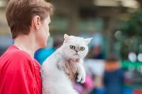 Выставка кошек в МАКСИ, Фото: 23